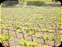 AreaActuacionAgricultura2