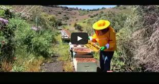 COAG_Video