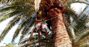COAG Canarias Proyecto Experimental Denominación de Origen