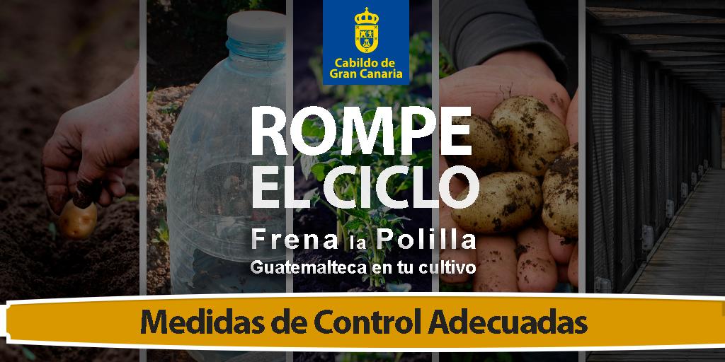 Coag Canarias Medidas de Control polilla guatemalteca